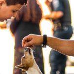 GCM de Itapevi ensina alunos da rede municipal a adestrar cães
